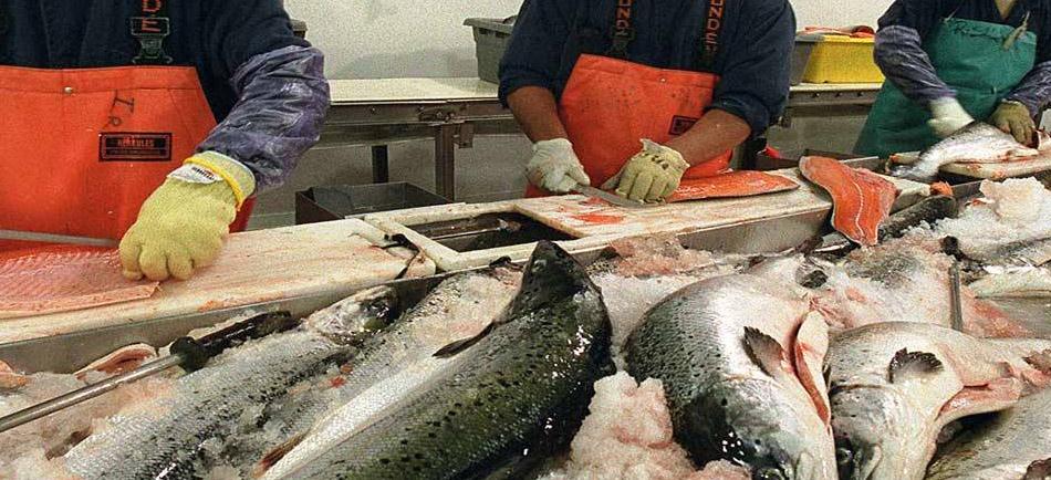 Balıkçılık Sektöründe İş Sağlığı ve Güvenliği - Erataş İş Güvenliği Ekipmanları