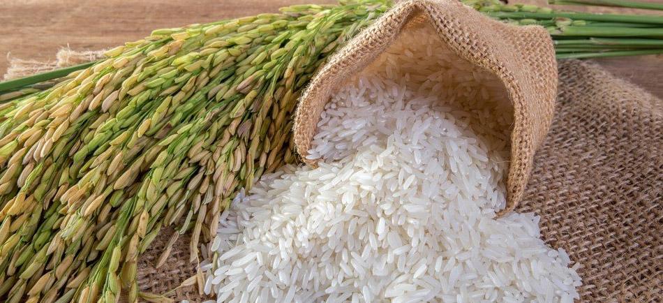 Pirinç Üretiminde İş Sağlığı Güvenliği - Erataş İş Güvenliği Ekipmanları